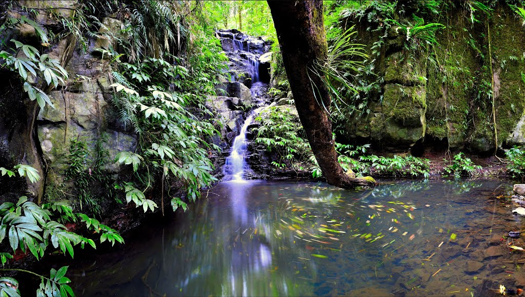 Barker Creek, Bunya Mountains