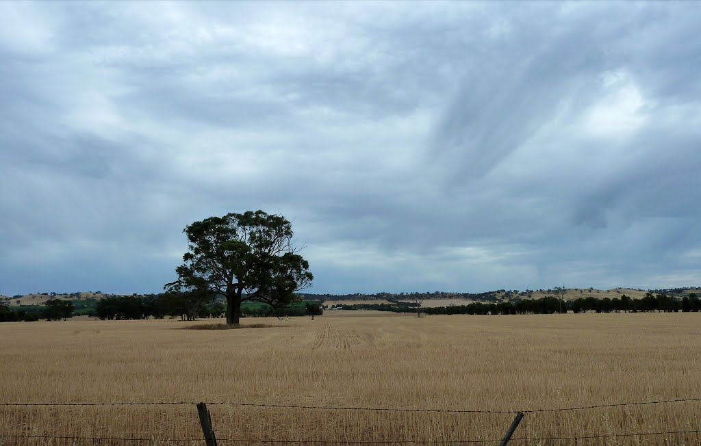 Wheat Country, Central Victoria.