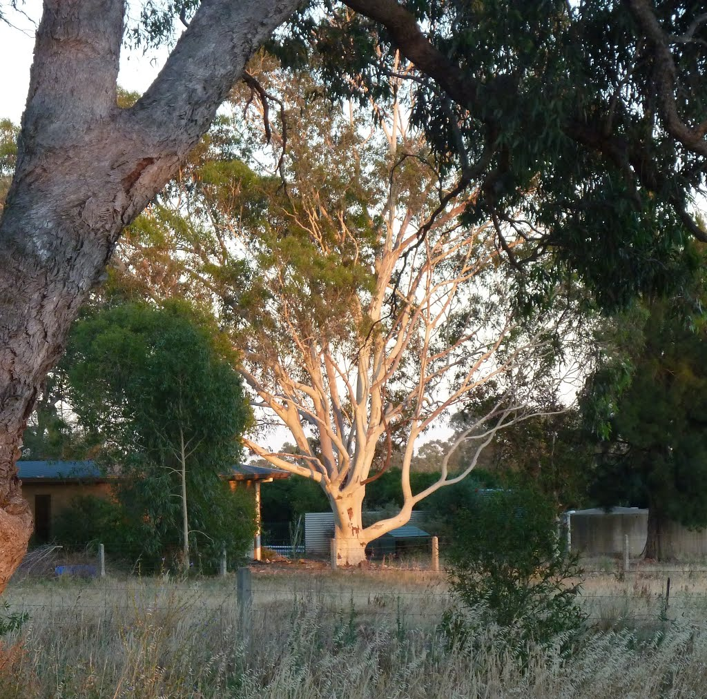Boxing Day Morning, Kyabram.