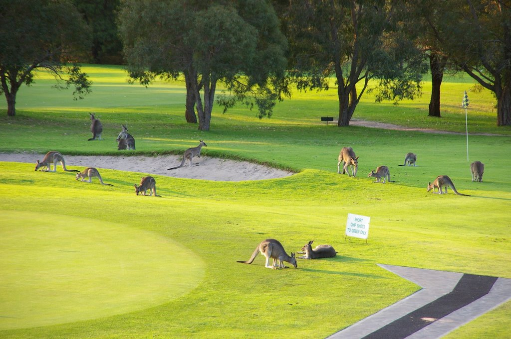 Golf Course, Merimbula, NSW