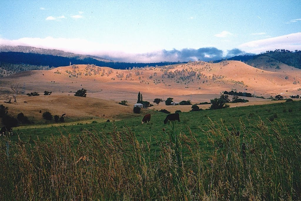 Rural scenes along Lyell Highway between Hamilton & Gretna