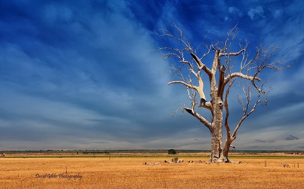 Country Victoria by David Gibbs