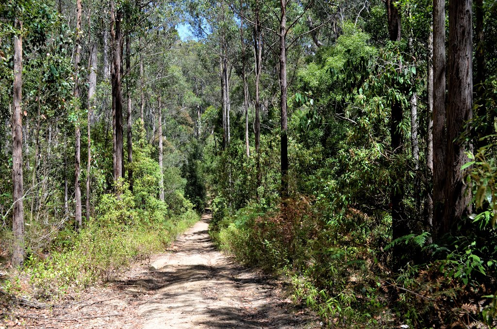 German Track, Wombat Forest