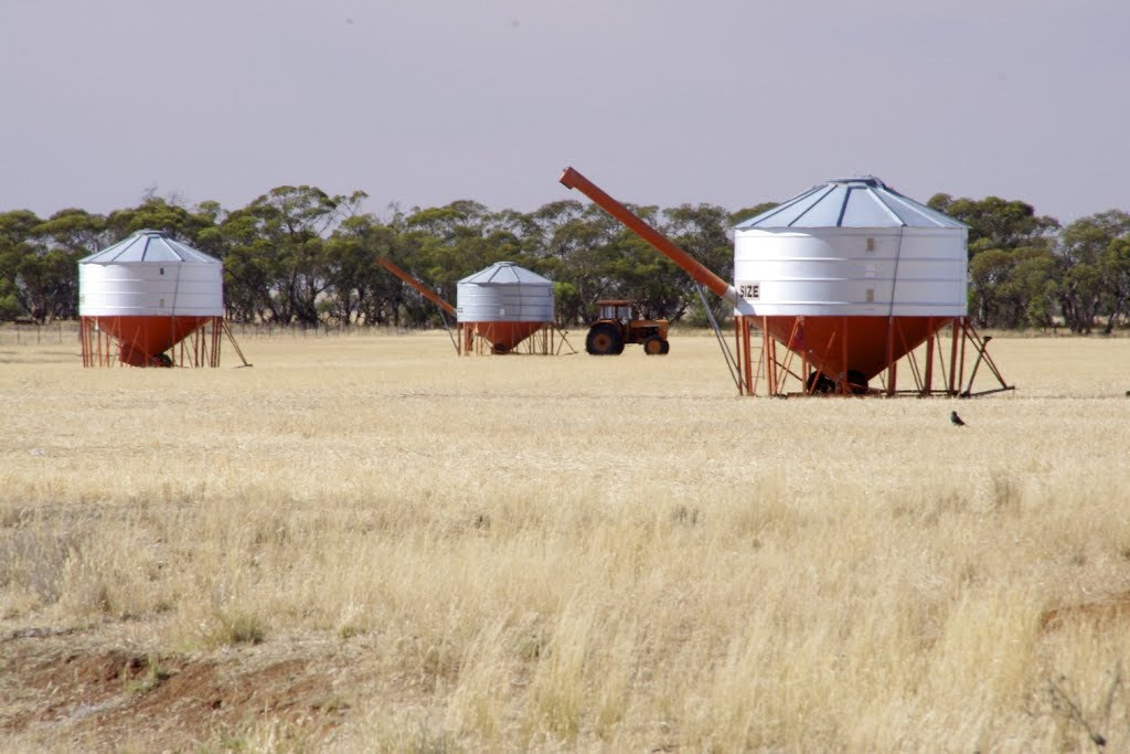 Field bins near Quambatook