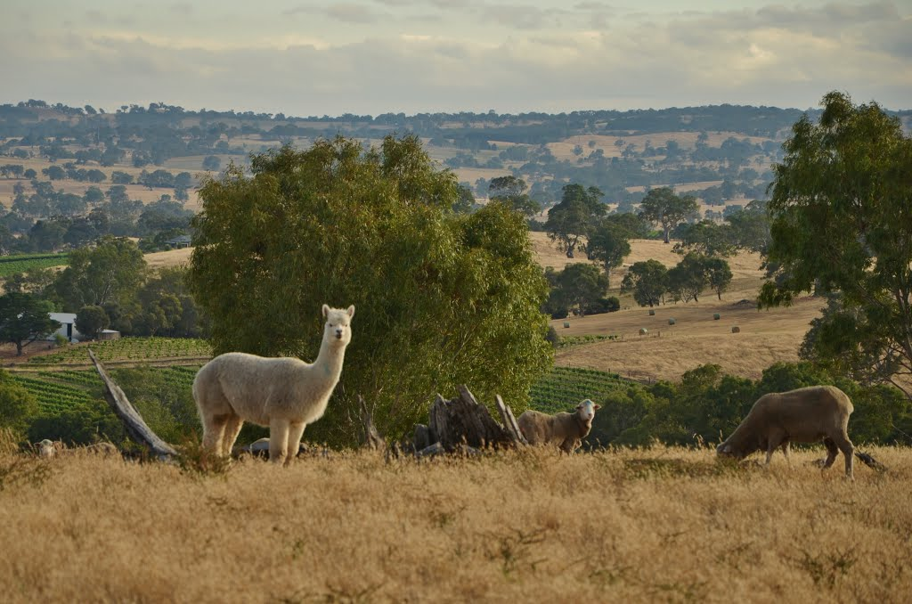 Eden Valley (Australie)
