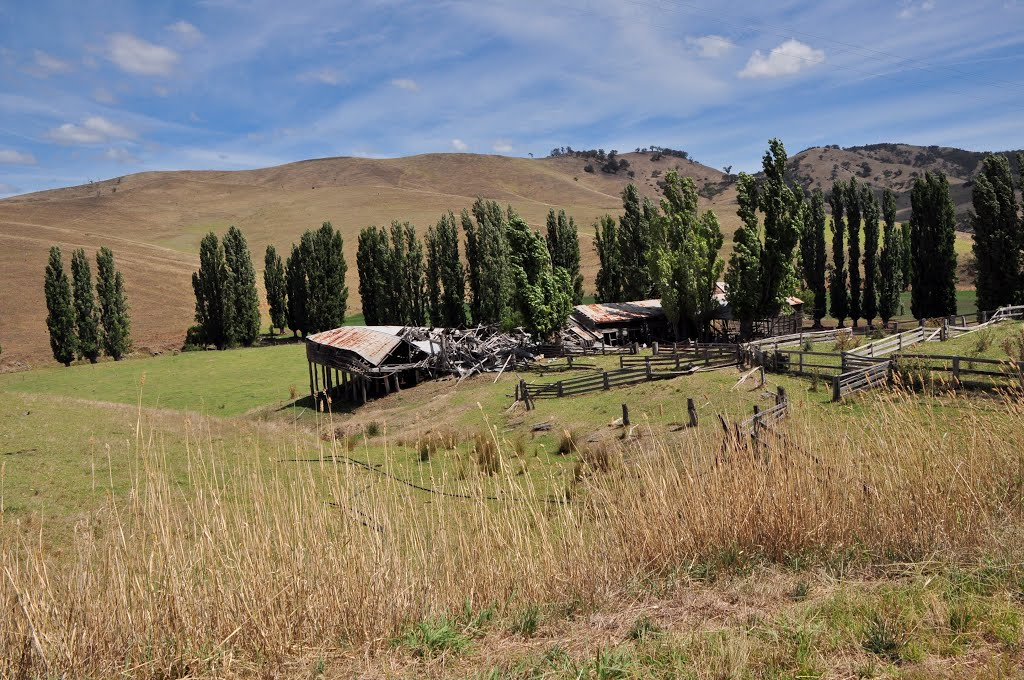 Ensay North, shearing sheds from the old Ensay Station