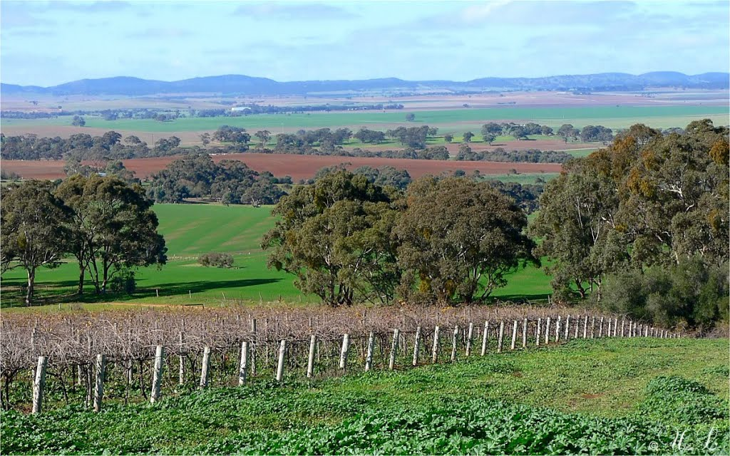 Seven Hill, Clare Valley, South Australia