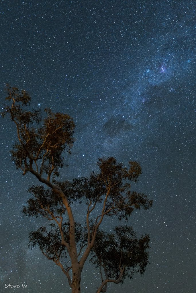 The Southern Cross shining brightly above a Pilbara Ghost Gum