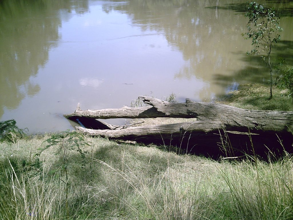 log on the river