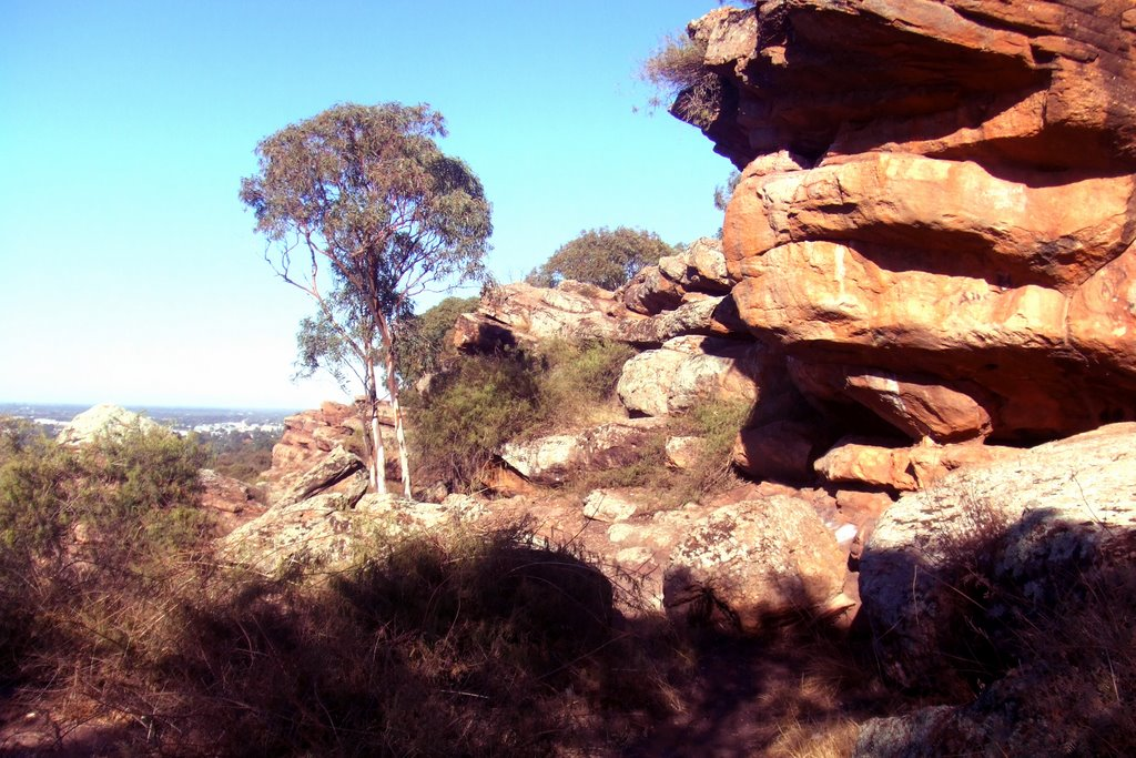 Landscape -  near Griffith, NSW