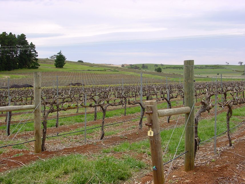 Clare Valley, Sevenhill Cellars