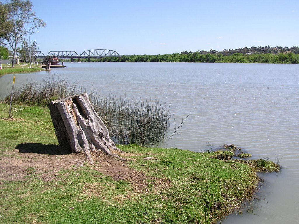 The Murray at Murray Bridge, South Australia