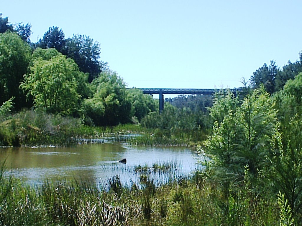Redbournberry Bridge over the Hunter River